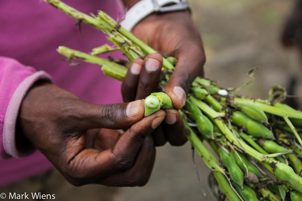 Snacks in Ethiopia