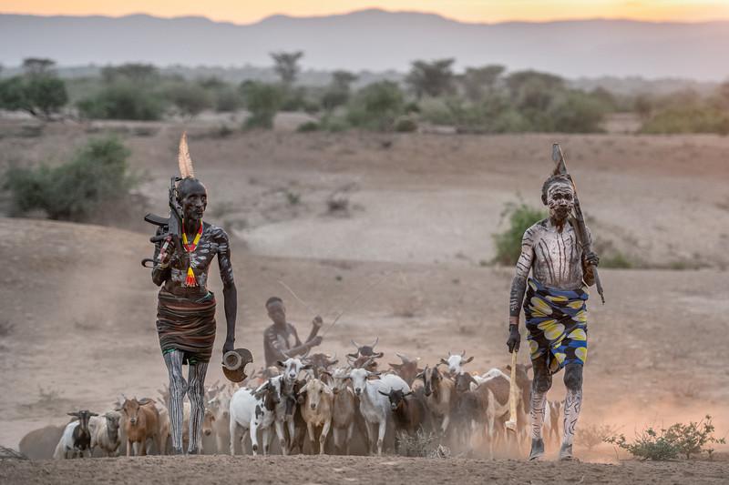 Herding at sunrise