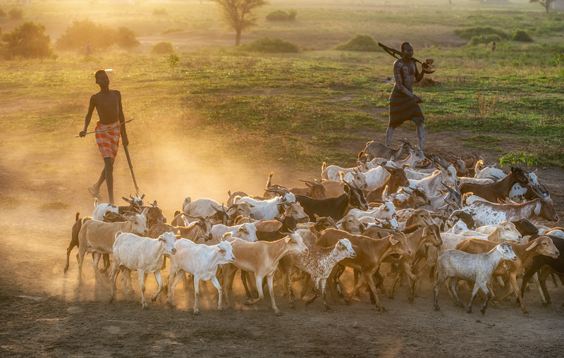 Goats to the village