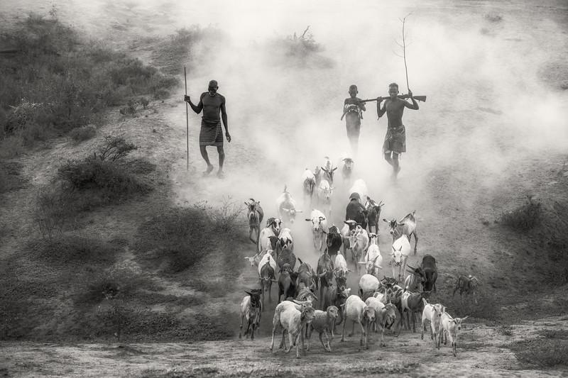 Sheep and goats to Dus, Kara lands