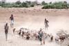 Kara goat herders