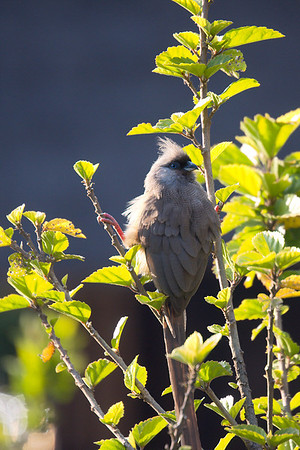 The Sheraton's bird lifde is also wuite interesting. Ethiopia is a birder's paradise.