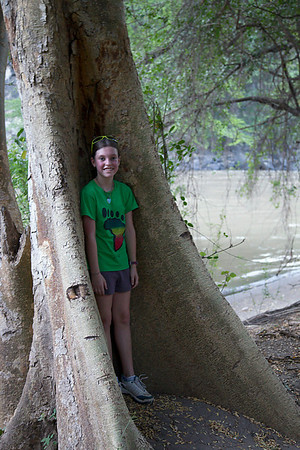 Hammock tree!