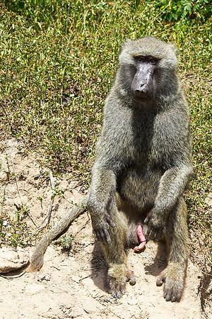 Proud baboon :-)