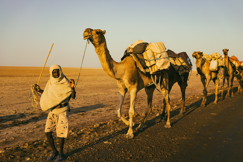 Salt Caravan in the Ethiopian Desert