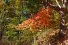 NM06 - Fall colours