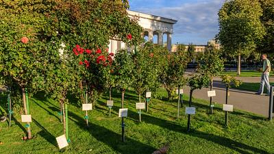 Rosengarten im WIener Volksgarten