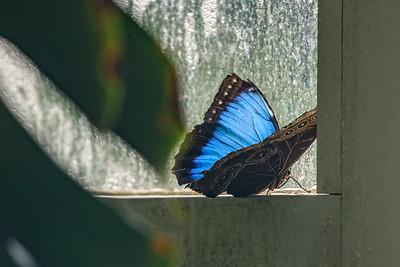 Schmetterling im Schmetterlings- und Palmenhaus in Wien