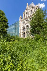Wildlife Garden, Natural History Museum, London