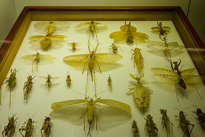 Insects, Natural History Museum, London