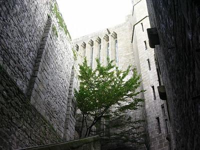 Grønne vekster ved klosterkirkens murer (Foto: Ståle)