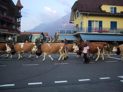 Cow Parade in Interlaken, Switzerland.
