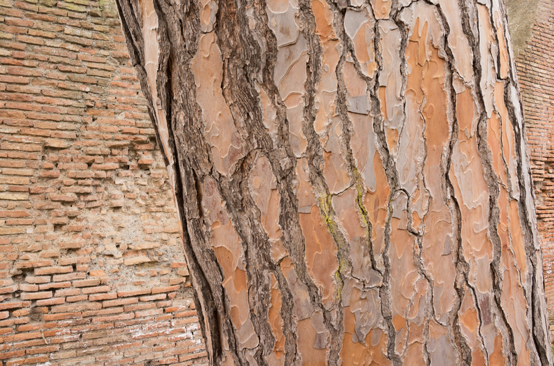 Ostia Antica. Rome. I can't resist a good brick wall. 2