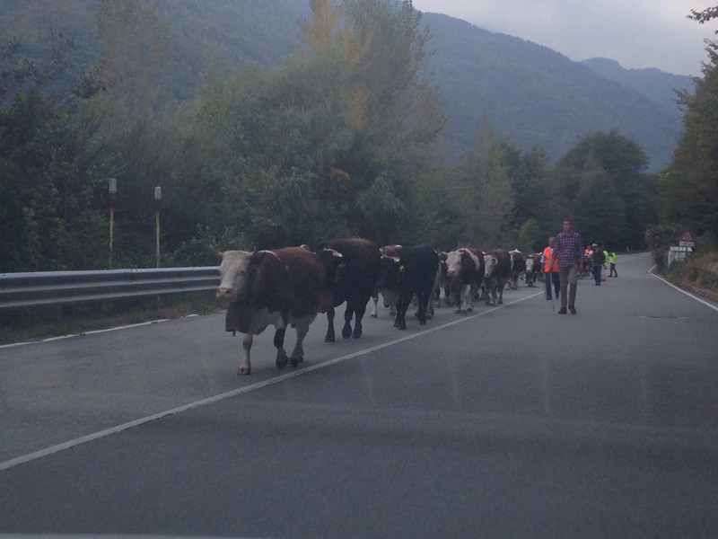 I met Claire and we headed through the Mont Blanc tunnel into Italy and over to Valle dell'Orco. On the way up it looked a bit wet and rainy, but we were also surprised to see a herd of cows being herded down the road towards us. They had the biggest bells around their neck I've ever seen.