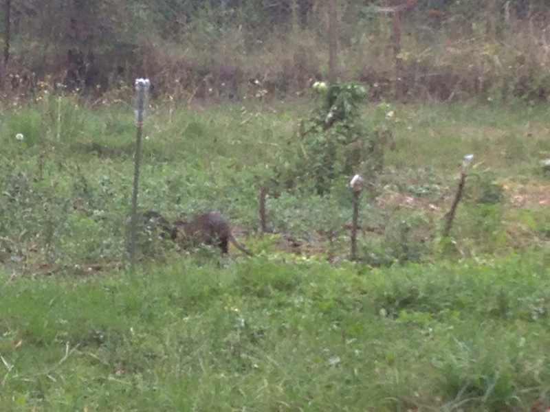 22/09/2017<br /> Last day in the Tarn and I saw three otters just near our gite! Not great pics, but so awesome to see them!
