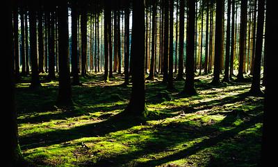Ardennes Forest in Belgium.