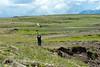 Sternula,tern,stern,Sterninae,Iceland,IJsland,Icelande