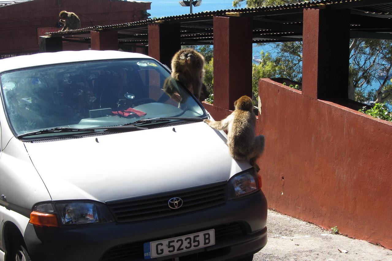 Day 2 - 032 - Monkeys!