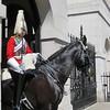 0165 - Horsey Guard 2