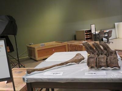 0001 - T-Rex Bones in Smithsonian