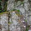 Moss and granite stone Visit Norway's oldest industrial community Alvøen museum near Bergen