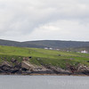 Discover the rugged Shetland Islands