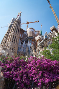 Spring at La Sagrada Familia