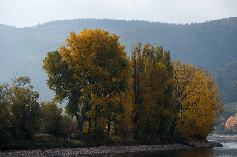 Fall on the Rhine