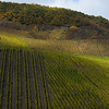 Rhine Vineyards