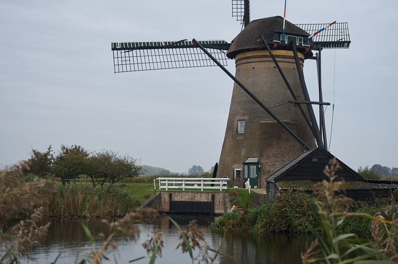 Windmill and Dog