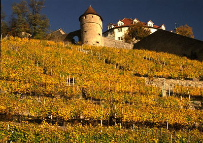 Castle and vineyards at Vaihingen