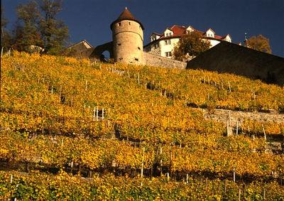 Castle and vineyards at Vaihingen