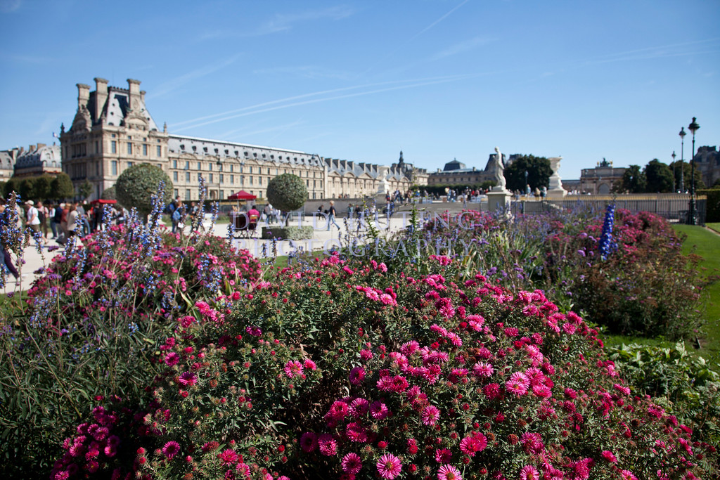 Louvre Flowers