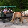 Or 1573 bij Schafbergbahn