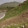 Ia 0415 Crocus vernus op Passo di Croce Domini