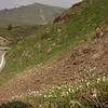 Ia 0416 Crocus vernus op Passo di Croce Domini