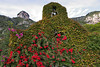 Ivy covered bell tower in Positano, Italy