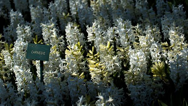 Carnegie Flowers
