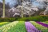 Various Flowers Blooming in Outside Gardens~Keukenhof Gardens