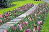 Keukenhof Garden Path
