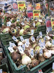 Bulbs for sale