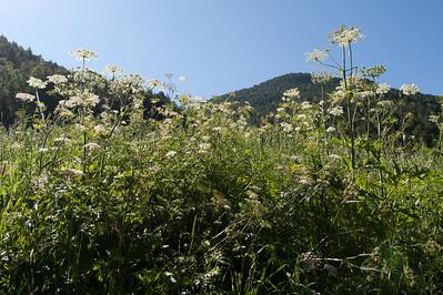 Beautifully bloomed flowers in Andorra