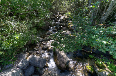 Flowing creek in the midst of forest canopy in Andorra