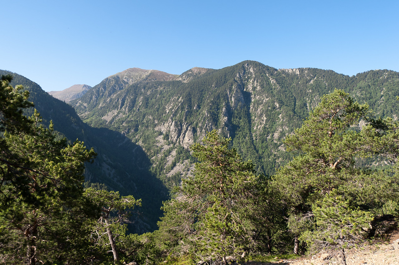 Green mountains and forest canopy in Andorra