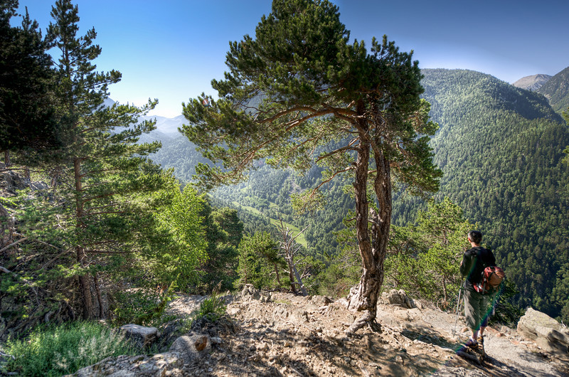 Overlooking view of forest canopy and mountains in Andorra