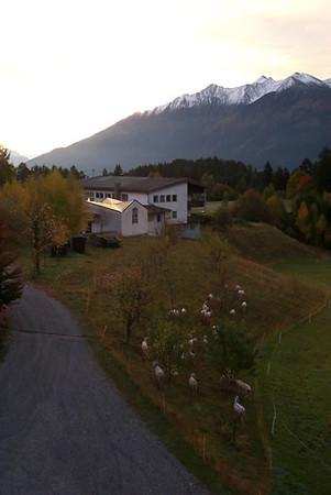 Sheep on the Edge of the Austrian Alps