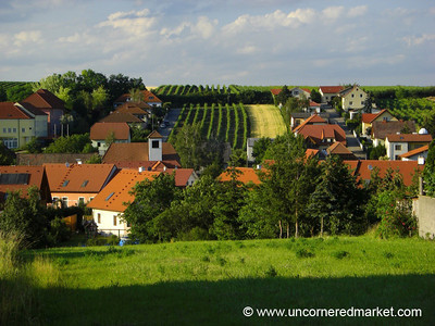 Vineyards in the Wine Quarter - Pulkau, Austria