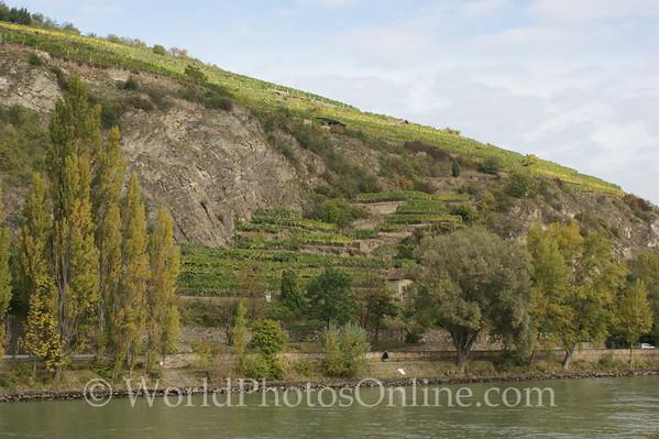Danube - Vineyard