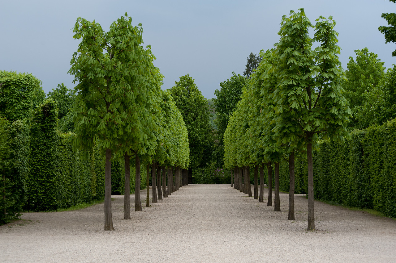 Beautiful landscape at the Schonbrunn Garden - Vienna, Austria