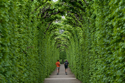Joggers on a tree-lined path in Vienna, Austria